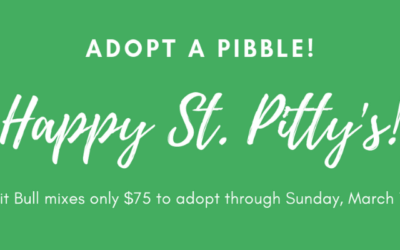 St. Pitty's Adoption Special