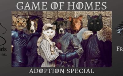 Game of Homes Adoption Specials Continue